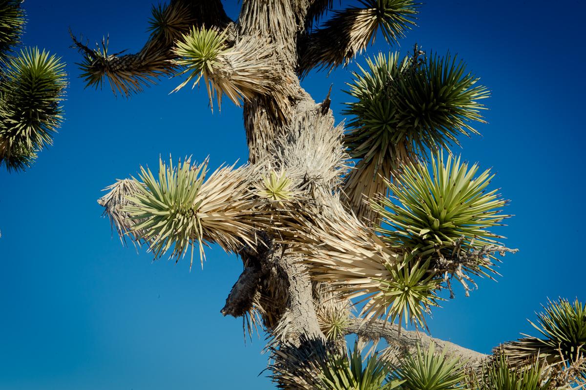 2015-01-07-Mojave-Wueste-Ausflug-Kalifornien-Baker-07