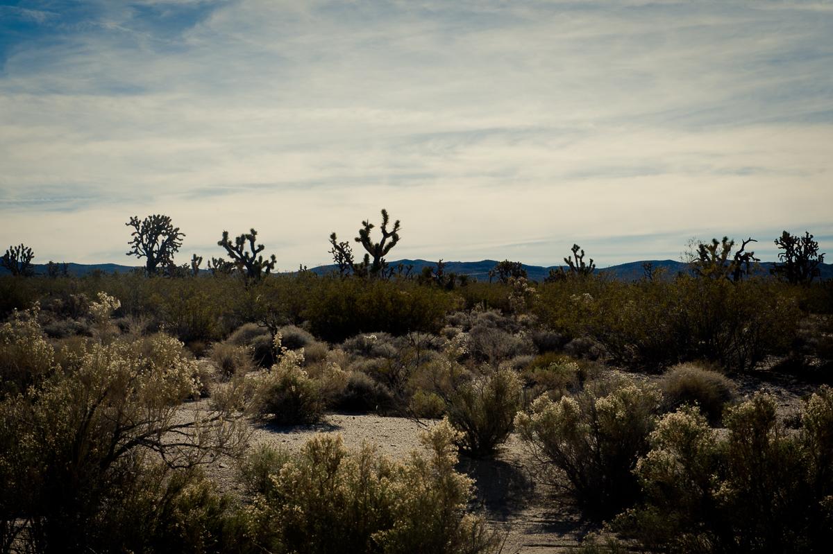 2015-01-07-Mojave-Wueste-Ausflug-Kalifornien-Baker-10