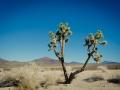 2015-01-07-Mojave-Wueste-Ausflug-Kalifornien-Baker-06