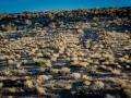 2015-01-07-Red-Rock-Canyon-Las-Vegas-Nevada-19