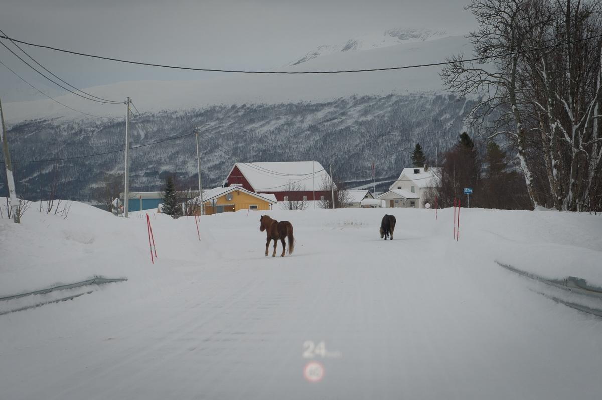 2015-Norwegen-Tromso-Malangen-Audi-07.jpg